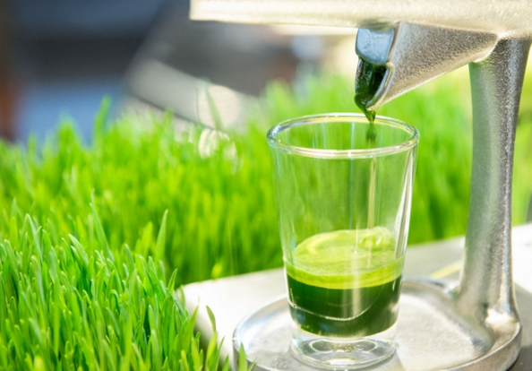 best wheatgrass juicer reviews